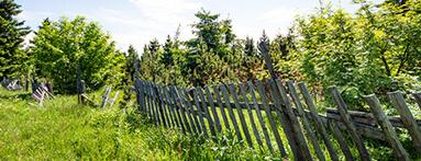 Mauvais entretien du jardin voisin