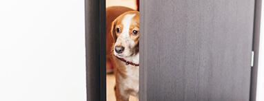 Aboiements du chien du voisin :