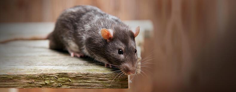 Insectes, cafards, souris dans votre logement