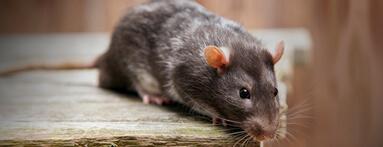 Insectes, cafards, souris dans votre logement :